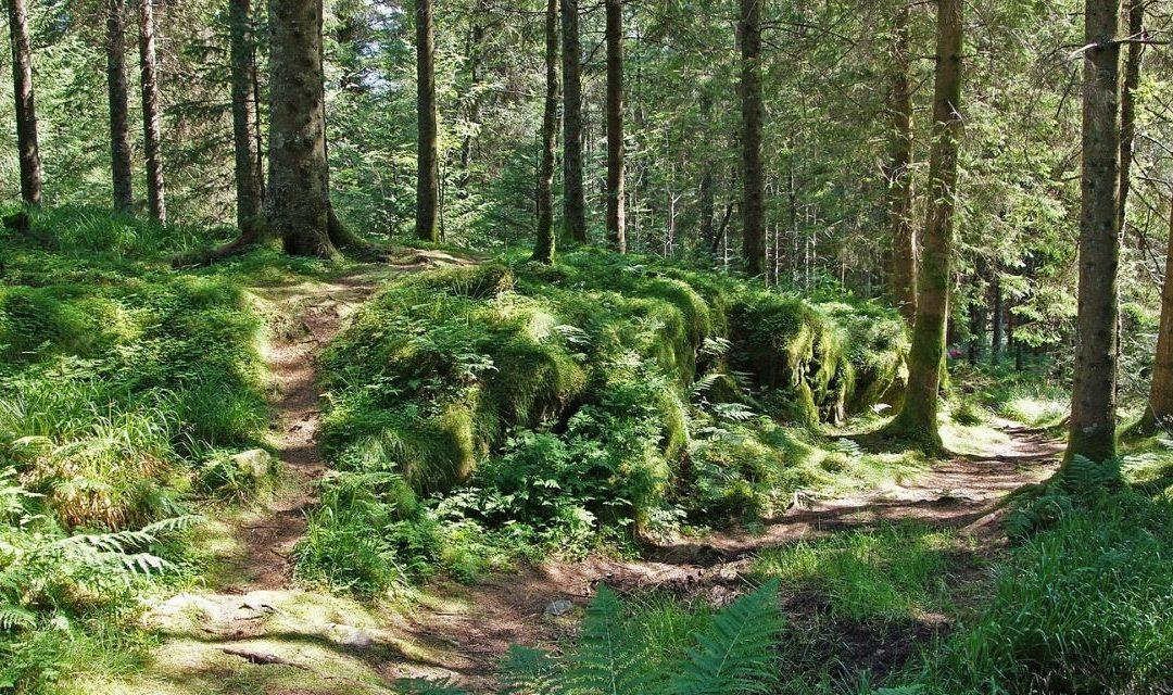 Veranderen door doorzetten, een bospad uitslijten