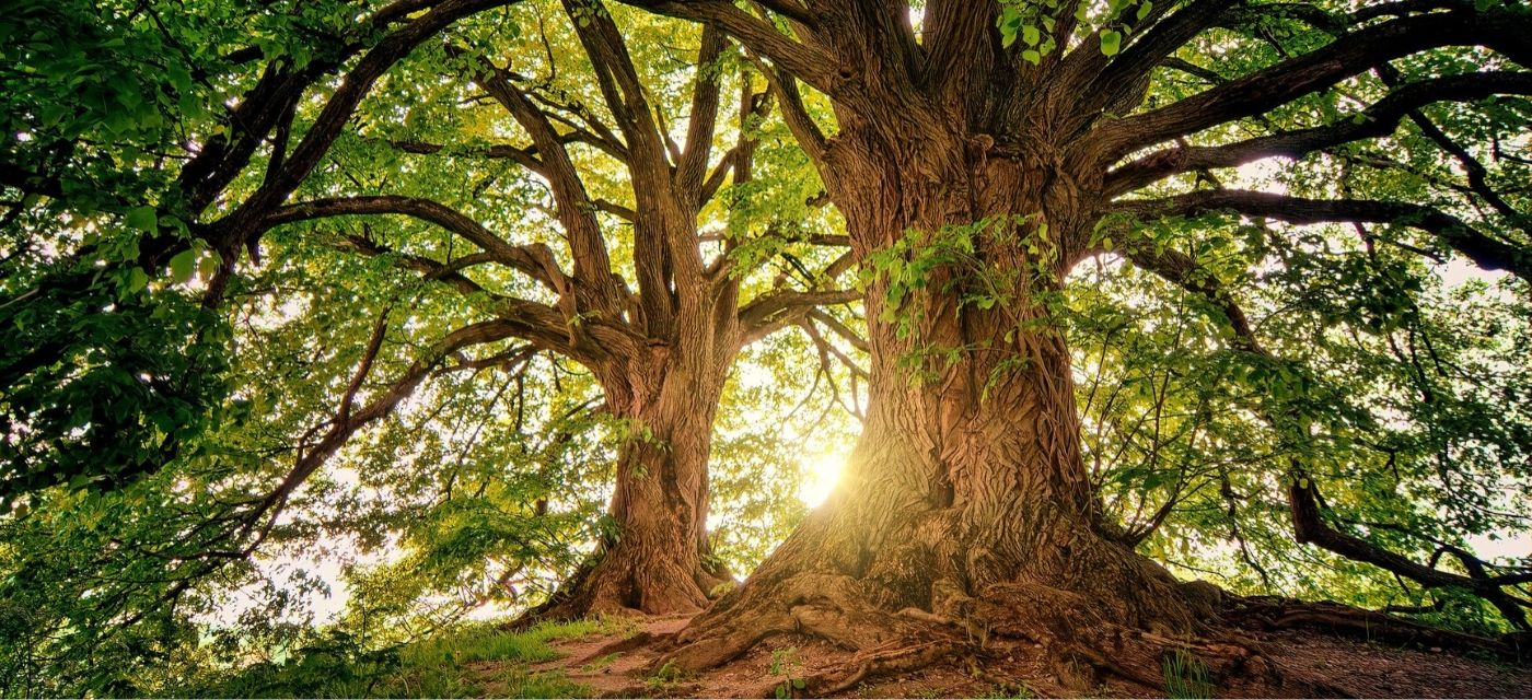 Het verhaal van de drie bomen